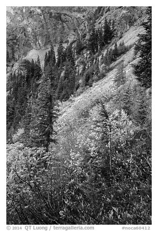 Steep slopes in autumn, North Cascades National Park Service Complex.  (black and white)
