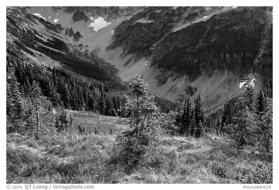 Fisher Creek Basin valley, North Cascades National Park.  (black and white)