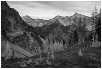 Alpine larch and mountains at sunset, Easy Pass, North Cascades National Park.  ( black and white)