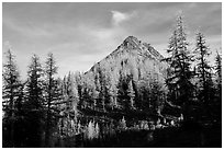 Subalpine larch at sunset, Easy Pass, North Cascades National Park.  ( black and white)