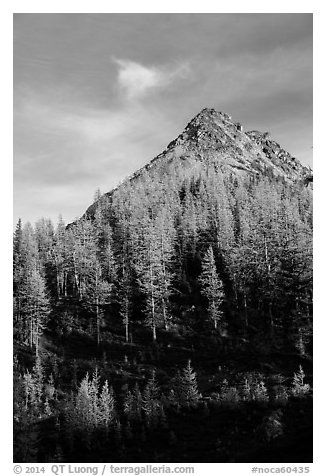 Alpine larch and peak at sunset, Easy Pass, North Cascades National Park.  (black and white)