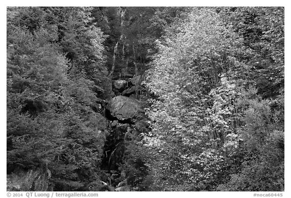 Waterfall in gully bordered by trees in fall foliage, North Cascades National Park Service Complex.  (black and white)