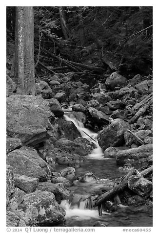 Creek with mossy boulders, North Cascades National Park Service Complex.  (black and white)