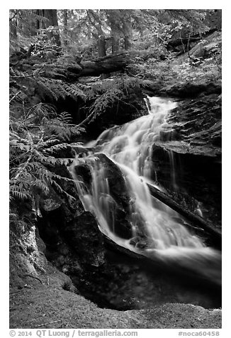 Creek cascading in forest, North Cascades National Park Service Complex.  (black and white)