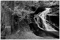 Creek in forest, North Cascades National Park Service Complex.  ( black and white)