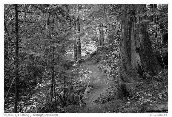 Thunder Creek trail, North Cascades National Park Service Complex.  (black and white)