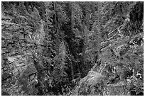 Waterfall, Agnes Gorge, Glacier Peak Wilderness.  ( black and white)