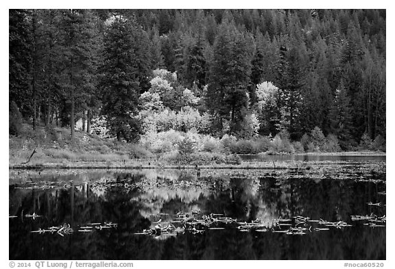 Autumn foliage reflected in Coon Lake, North Cascades National Park Service Complex.  (black and white)