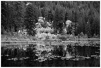 Autumn foliage reflected in Coon Lake, North Cascades National Park Service Complex.  ( black and white)