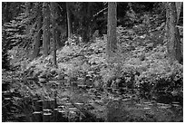 Shore reflection, Coon Lake, North Cascades National Park Service Complex.  ( black and white)