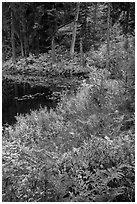 Shore in autumn, Coon Lake, North Cascades National Park Service Complex.  ( black and white)