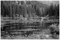 Coon Lake reflections, Stehekin, North Cascades National Park Service Complex.  ( black and white)