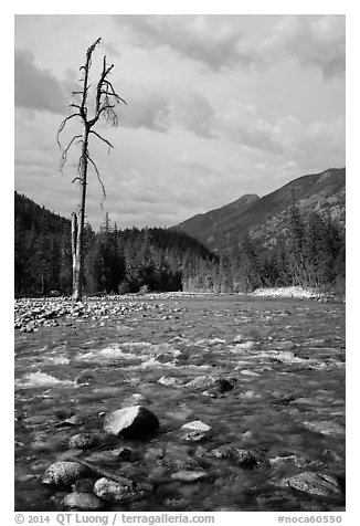 Isolated dead tree, Stehekin River, North Cascades National Park Service Complex.  (black and white)