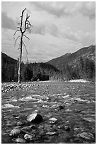 Isolated dead tree, Stehekin River, North Cascades National Park Service Complex.  ( black and white)