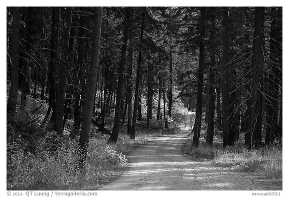 Road in forest, Stehekin Valley, North Cascades National Park Service Complex.  (black and white)