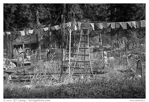 Vegetable garden, Stehekin, North Cascades National Park Service Complex.  (black and white)