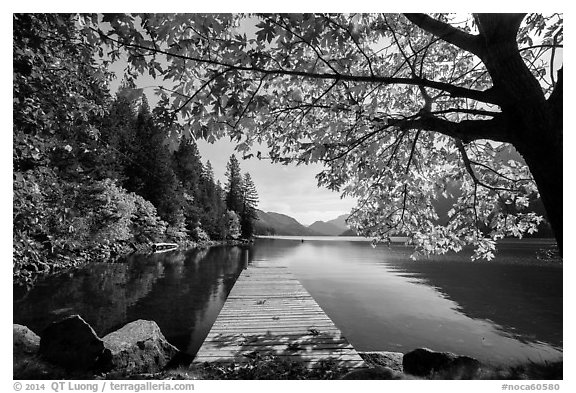 Deck framed by tree in autumn foliage, Lake Chelan, Stehekin, North Cascades National Park Service Complex.  (black and white)