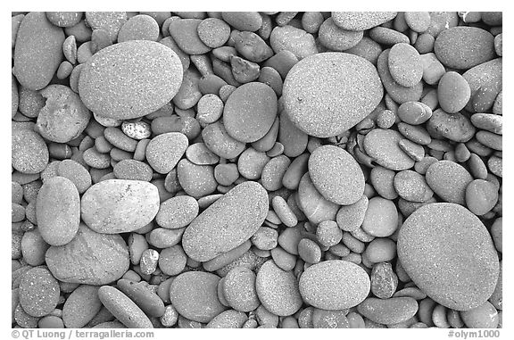 Round pebbles on beach. Olympic National Park (black and white)