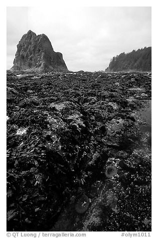 Tidepool at Rialto beach. Olympic National Park (black and white)