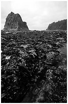 Tidepool at Rialto beach. Olympic National Park ( black and white)
