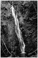 Mossy waterfall , Elwha valley. Olympic National Park ( black and white)