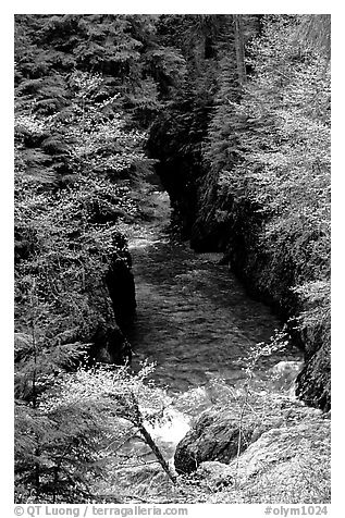 Quinault river in gorge. Olympic National Park (black and white)