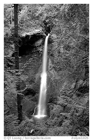 Marymere falls framed by trees. Olympic National Park (black and white)