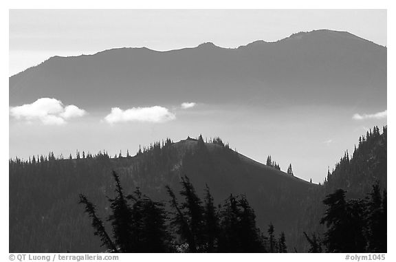 Wind-twisted trees and mountain ridges from Hurricane hill. Olympic National Park (black and white)