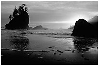 Beach, seastacks and rock with bird, Second Beach, sunset. Olympic National Park, Washington, USA. (black and white)