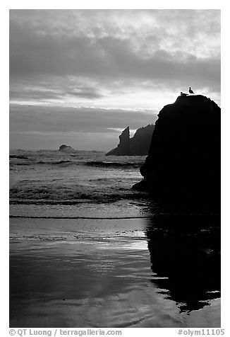 Rock with bird, Second Beach, sunset. Olympic National Park (black and white)
