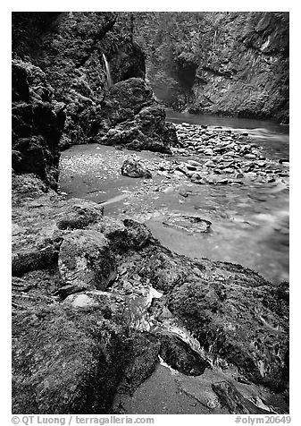 Mossy rocks and stream. Olympic National Park (black and white)