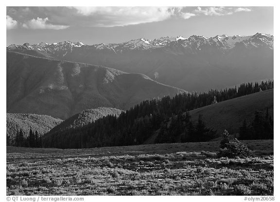Meadow with wildflowers, ridges, and Olympic Mountains. Olympic National Park (black and white)