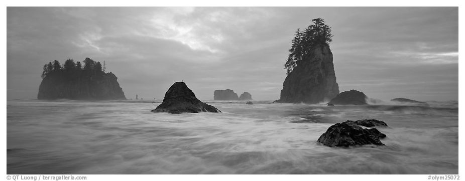 Misty seascape with sea stacks. Olympic National Park (black and white)