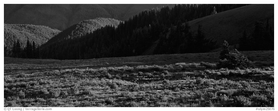 Shadows and wildflowers, late afternoon. Olympic National Park (black and white)