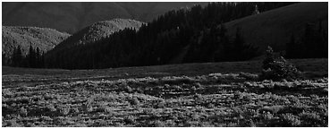 Shadows and wildflowers, late afternoon. Olympic National Park (Panoramic black and white)