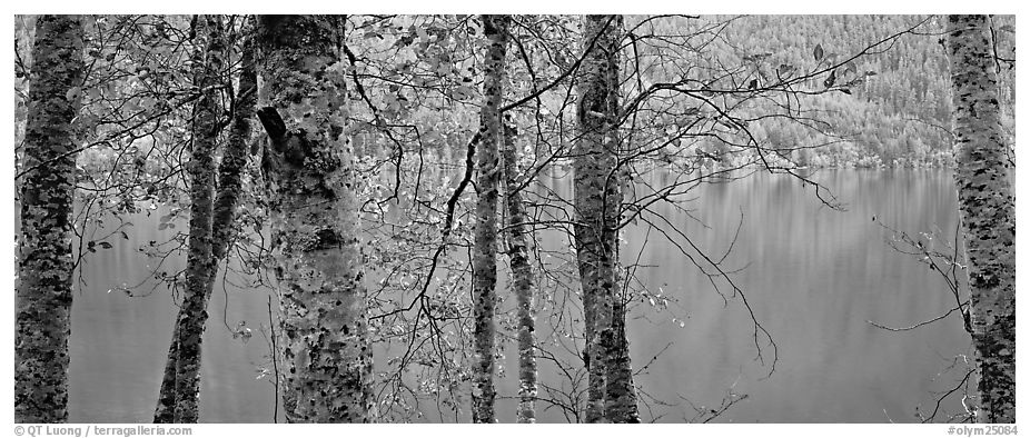 Tranquil trees and Crescent Lake. Olympic National Park (black and white)