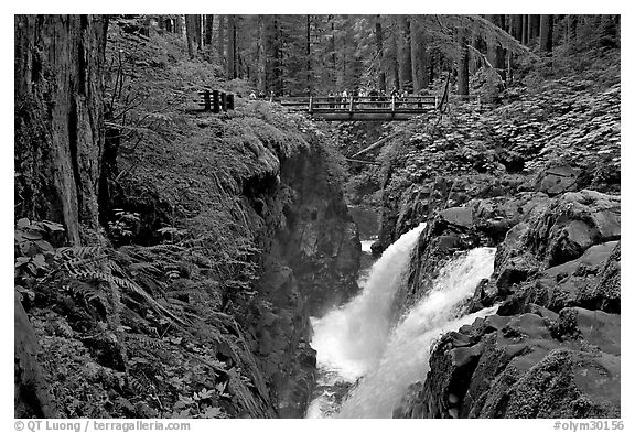 Soleduc falls and bridge. Olympic National Park (black and white)