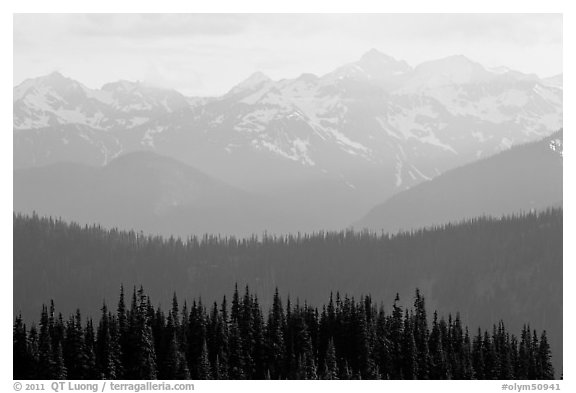 Hazy view of ridges and Olympic mountains. Olympic National Park (black and white)