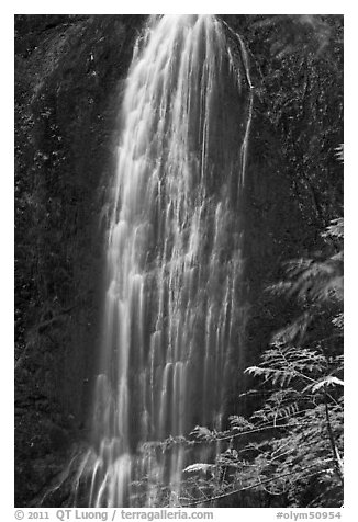 Marymere Falls, summer. Olympic National Park (black and white)