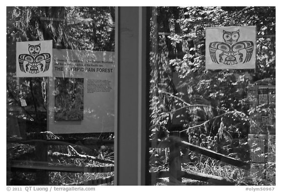 Rain forest, Hoh rain forest visitor center window reflexion. Olympic National Park (black and white)