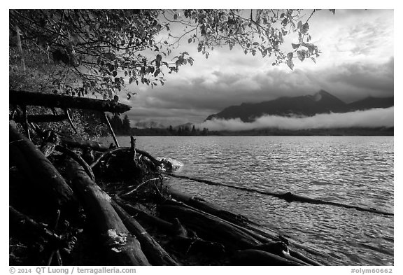 Lake Quinault from July Creek. Olympic National Park (black and white)