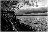 Lake Quinault from July Creek. Olympic National Park ( black and white)