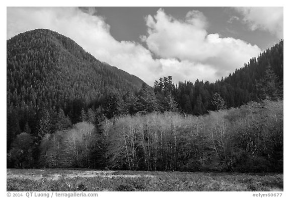 Meadow, trees, and hills in late autumn, Lake Quinault North Shore. Olympic National Park (black and white)