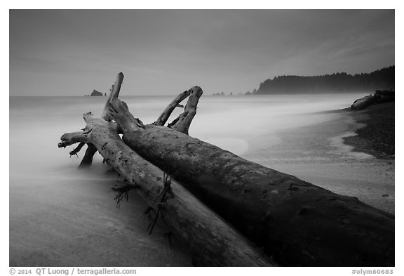 Driftwood and wave motion at dusk, Rialto Beach. Olympic National Park (black and white)