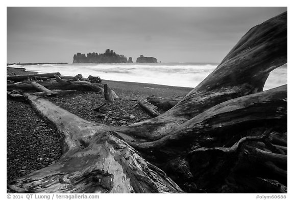 Driftwood and sea stacks in stormy weather, Rialto Beach. Olympic National Park (black and white)
