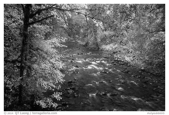 North Fork of Sol Duc River in autumn. Olympic National Park (black and white)