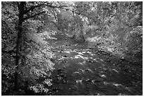 North Fork of Sol Duc River in autumn. Olympic National Park ( black and white)