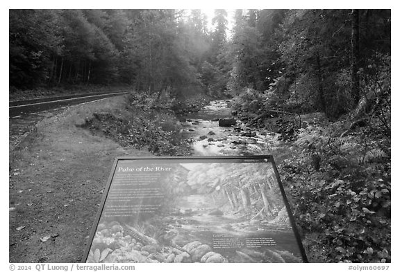 Sol Duc River interpretive sign. Olympic National Park (black and white)