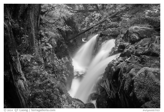 Soleduc Falls, gorge, and footbridge in autumn. Olympic National Park (black and white)