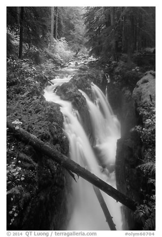Soleduc Falls dropping into narrow gorge in autumn. Olympic National Park (black and white)